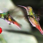 Racikan nektar terbaik untuk konin