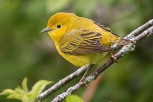 Apakah Virus Corona Bisa Menular & Terjadi Pada Burung? Ini Jelasnya