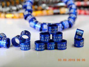 Ring model laser warna biru