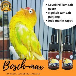 vitamin lovebird juara