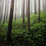 suara burung di hutan