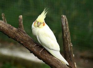 suara burung falk